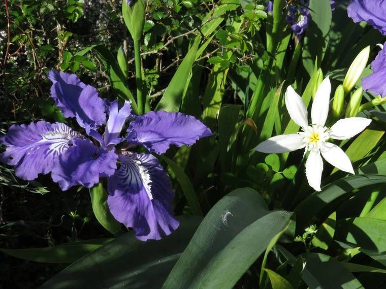 Iris 2015 555b1c2b70694