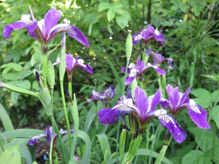 Iris 2015 - Page 3 5576f4d8282d4