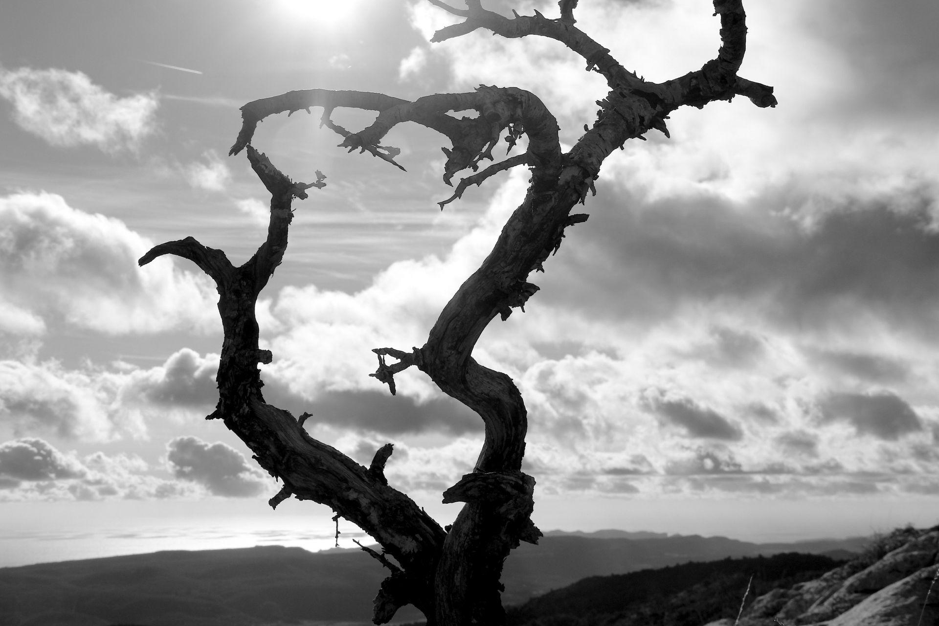 Les photographes de Joomeo : De l'obscurité à la lumière avec Michel Renard