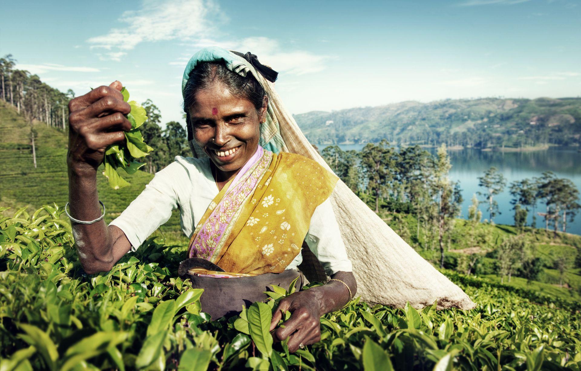Voyage sur-mesure, Sur la route du thé