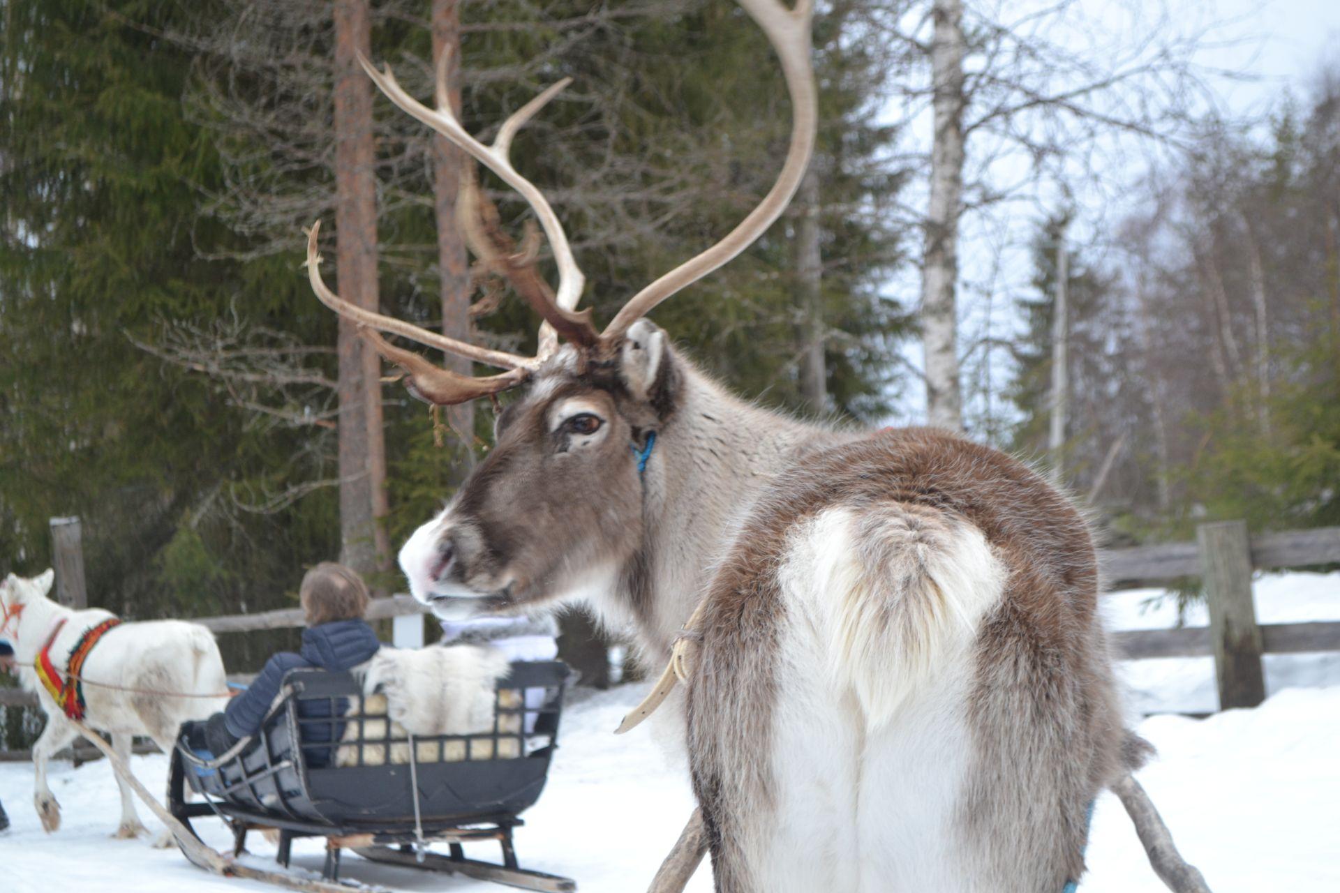 Vacanță de iarnă în Laponia autentică: aurore boreale și multiactivități!