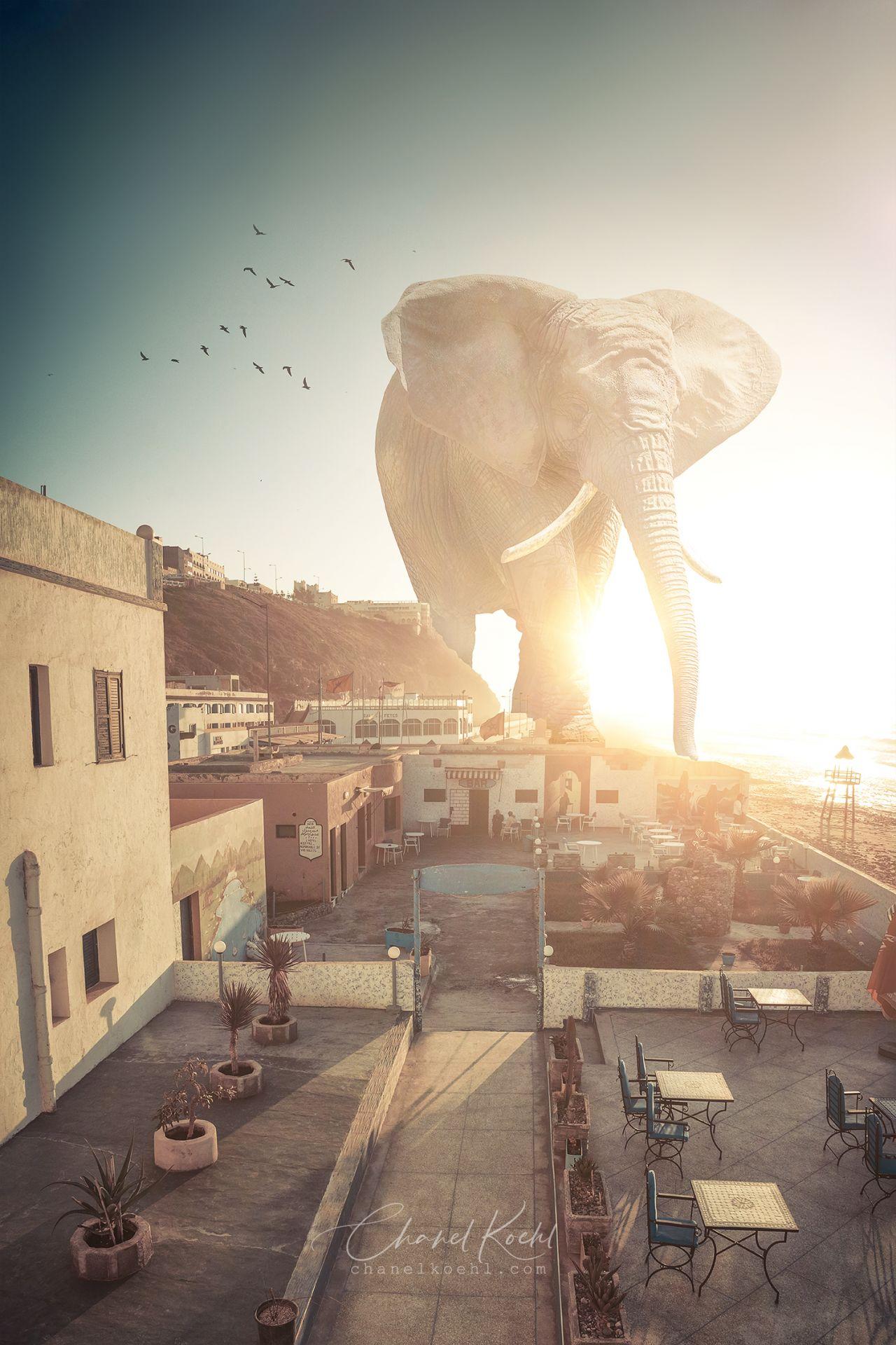 Un éléphant dans la ville - ©Chanel-Koehl