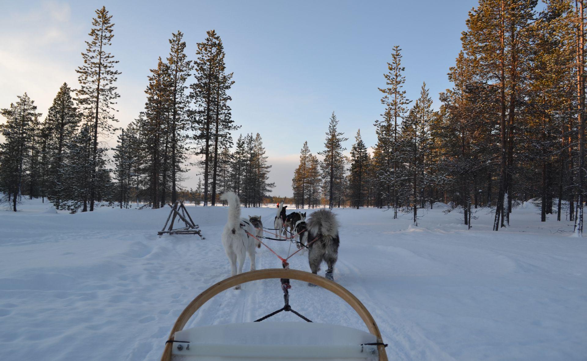 Vacanță de iarnă în Laponia: aurore boreale și experiențe autentice!