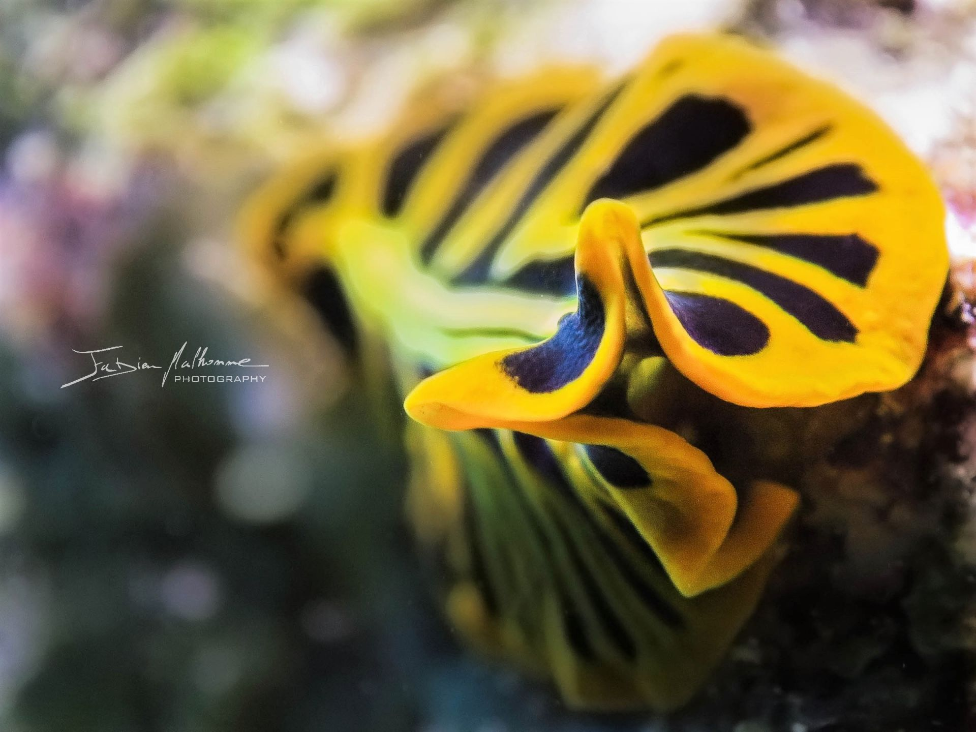 Photographier le monde marin - Ver plat