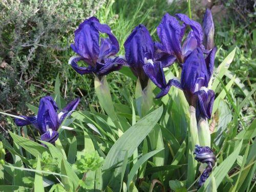 Iris 2015 5540d40add931