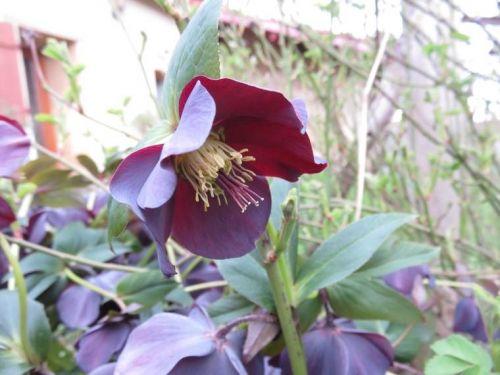 Vivaces au jardin - Karaba 2015 55412551400ce
