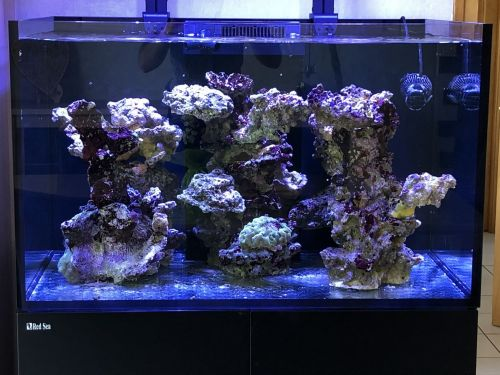 Retour au reef RED SEA REEFER 300XL 5ed4cbb6eeb7a